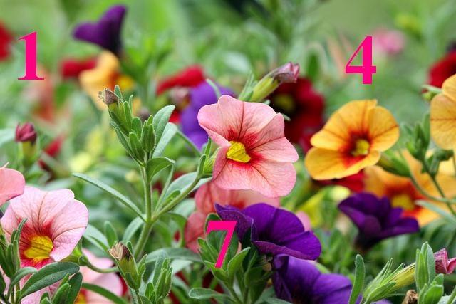 Virágnyelv – A különböző karakterek kedvenc virágai