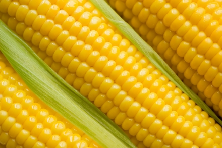 A kukorica kedvező hatásai